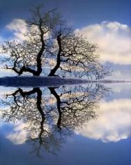 reflet arbre.jpg