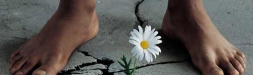 Cultivons-la-paix-500x150.jpg