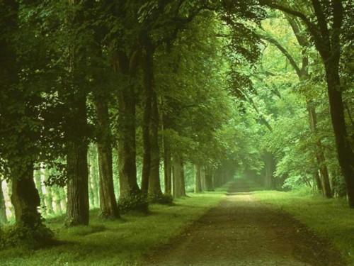 fond-ecran-chemin-au-milieu-des-arbres.jpg