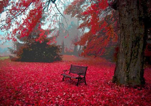 automne21.jpg