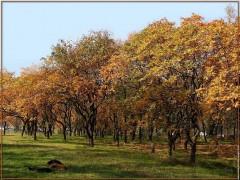 galerie-membre,automne,automne-2008-3c.jpg