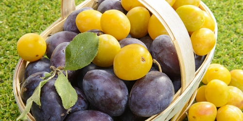 prunes.jpg