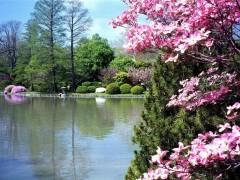printemps_0012.jpg
