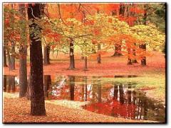 automne01.jpg