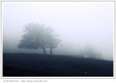 arbre_brouillard.jpg