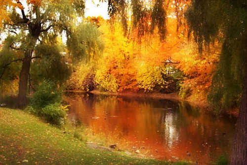 L'automne au parc Raimbault a Montreal.jpg