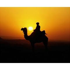 désert bédouin.jpg