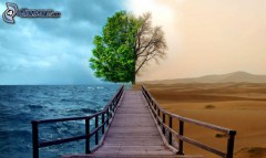 nature,-jetee-en-bois,-arbre,-mer,-desert-174419.jpg