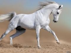 cheval-blanc-174034.jpg
